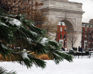 A snowy evergreen branch frames the Washington Square Arch