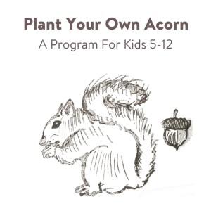 acorn-planting