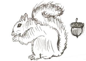 squirrel-small