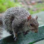 nyc-squirrels-1